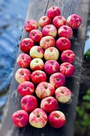1 jablko denně je povinnou součástí jídleního plánu metabolic balance®